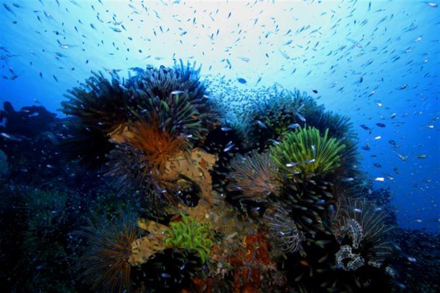 Aurora Dune Liveaboard Indonesia (1)