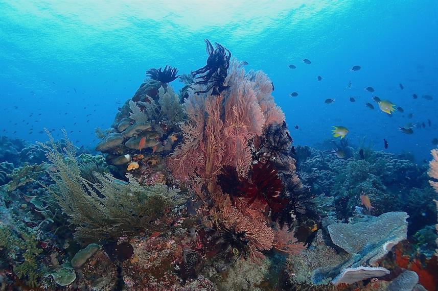 Ratu Laut - Liveabaord Indonesia (6)