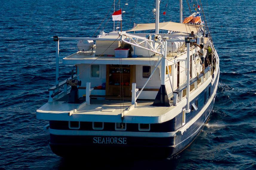 Seahorse - Liveaboard Indonesia (28)