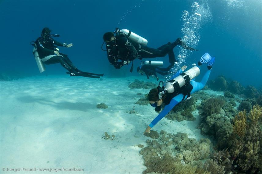 Seven Seas - Liveaboard Indonesia (7)