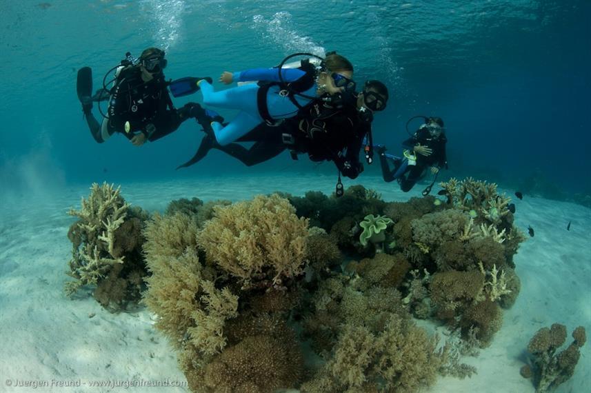 Seven Seas - Liveaboard Indonesia (8)