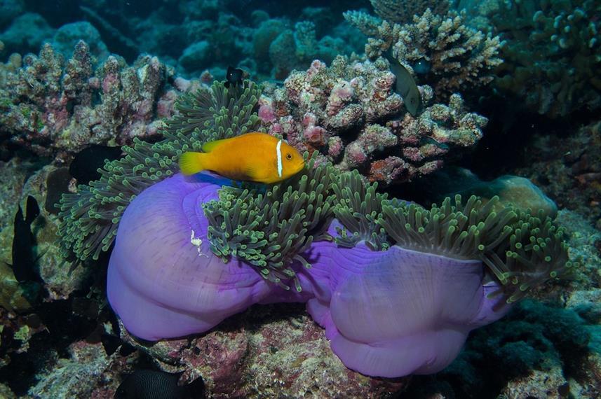Raja Ampat Explorer - Liveaboard Indonesia (4)