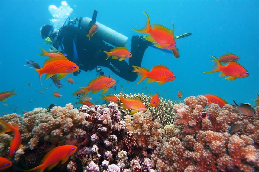 Raja Ampat Explorer - Liveaboard Indonesia (6)