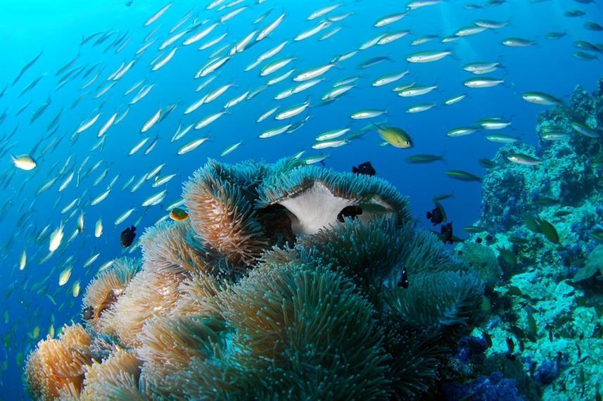 Raja Ampat Explorer - Liveaboard Indonesia (7)