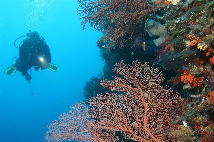 Sea Safari VIII - Liveaboard Indonesia (7)